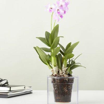 blument pfe k bel nutzungsbereich innenbereich zum verlieben. Black Bedroom Furniture Sets. Home Design Ideas