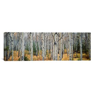 Lovely U0027Aspen Trees In A Forest, Alberta, Canadau0027 Photographic Print On Canvas