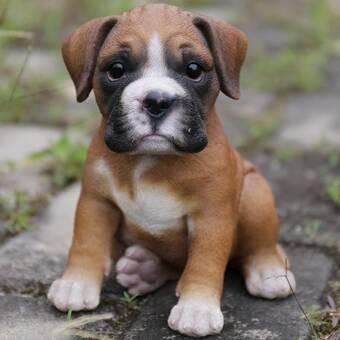 Hi-Line Gift Ltd  Dog Boston Terrier Statue & Reviews | Wayfair