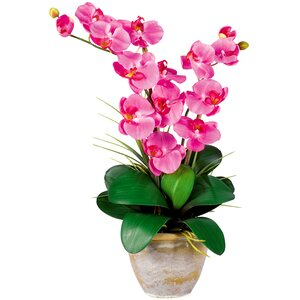 Double Phalaenopsis Silk Orchid Flower
