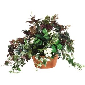 Mixed Ivy Table Top Plant In Terracotta Planter