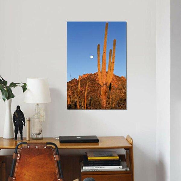 East Urban Home U0027Saguaro Cactus In Desert Landscape, Sonoran Desert, Saguaro  National Monument, Arizonau0027 Photographic Print On Canvas U0026 Reviews | Wayfair