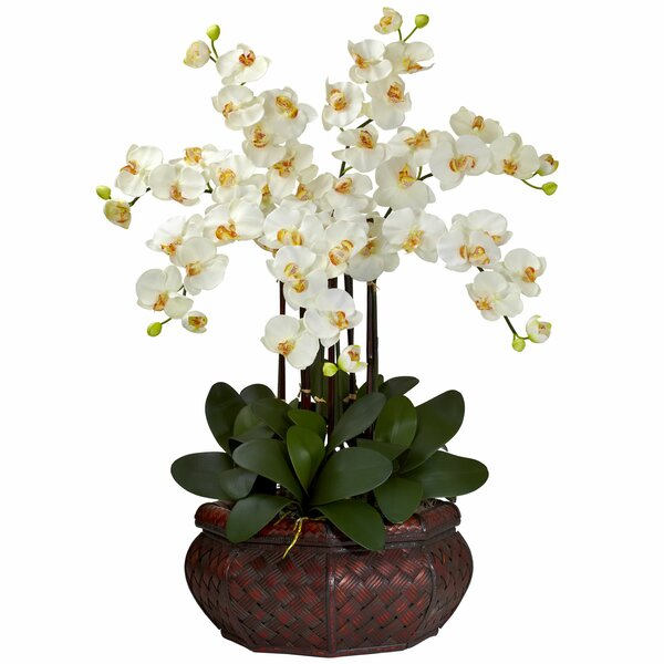 Charlton home large phalaenopsis silk flower arrangement reviews charlton home large phalaenopsis silk flower arrangement reviews wayfair mightylinksfo Image collections