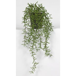 Tea Leaf Hanging Plant in Pot by Wildon Home