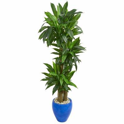 entracing palm tree type house plant. Artificial Floor Cornstalk Dracaena Plant in Planter Nearly Natural Silk Pot  Reviews Wayfair