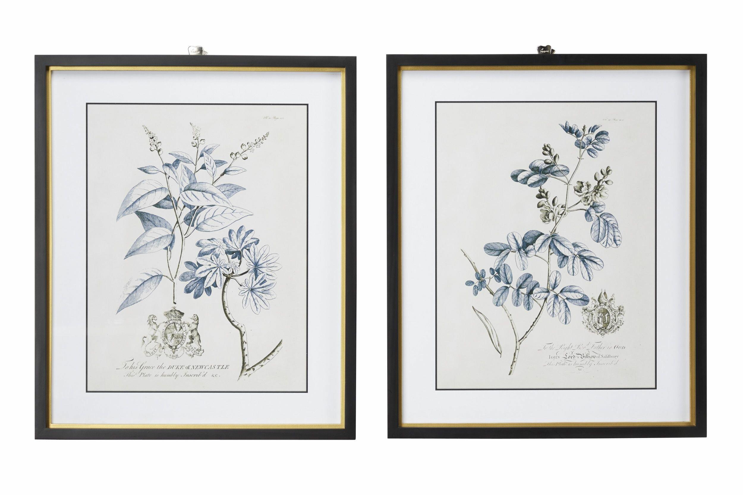 Large Rectangular Blue Vintage Flower Illustrations Framed Wall Art Set Of 2 20 X 24 Each