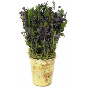 Lavender Centerpiece in Pot