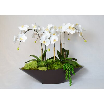 T&C Floral Company Orchid in Metal Boat Color: White