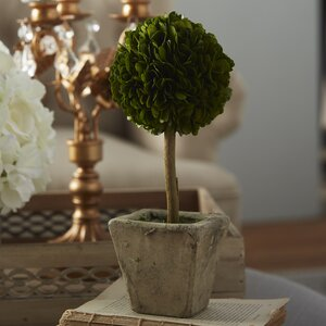 Boxwood Round Tapered Topiary in Planter