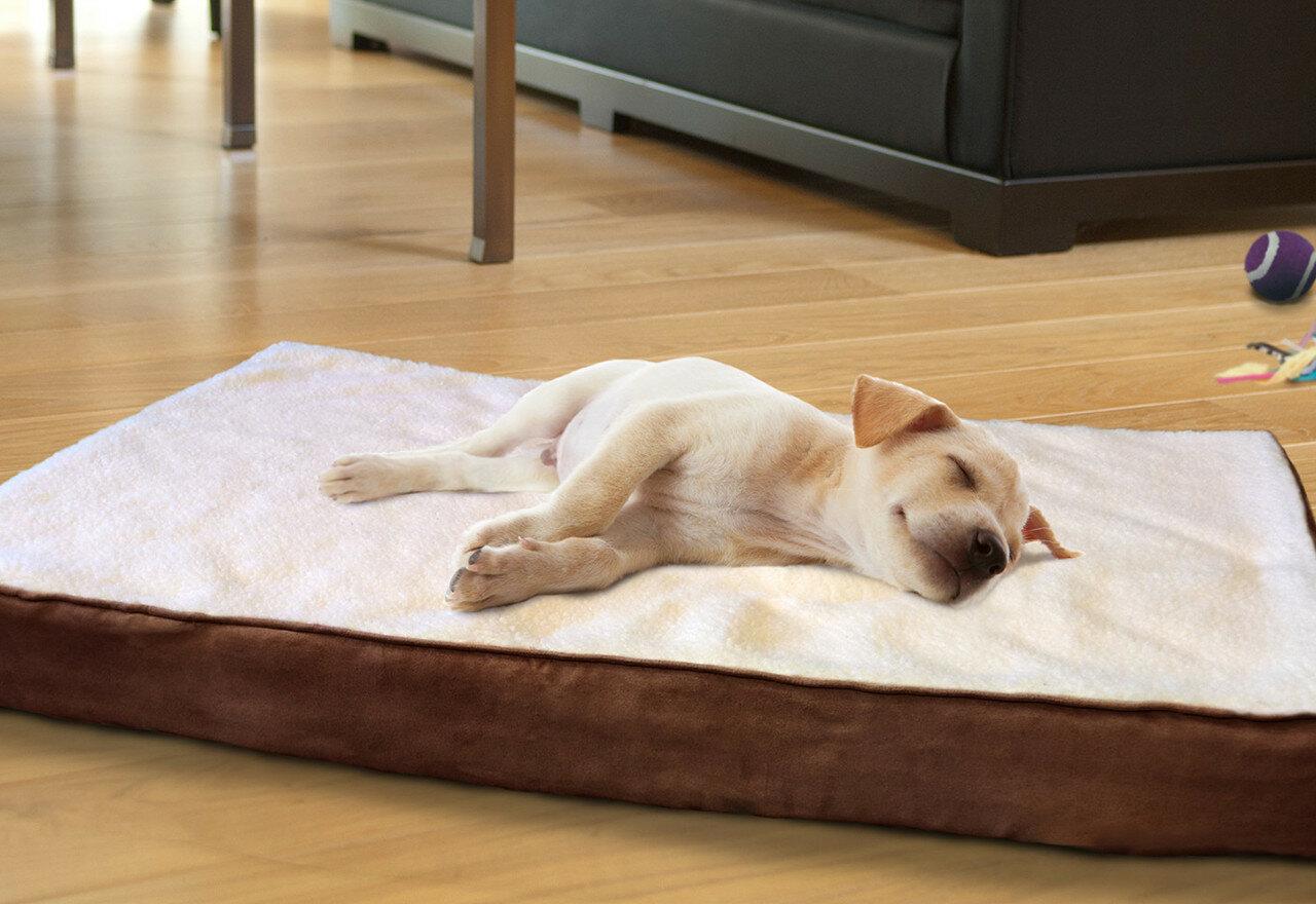 Image result for dog essentials