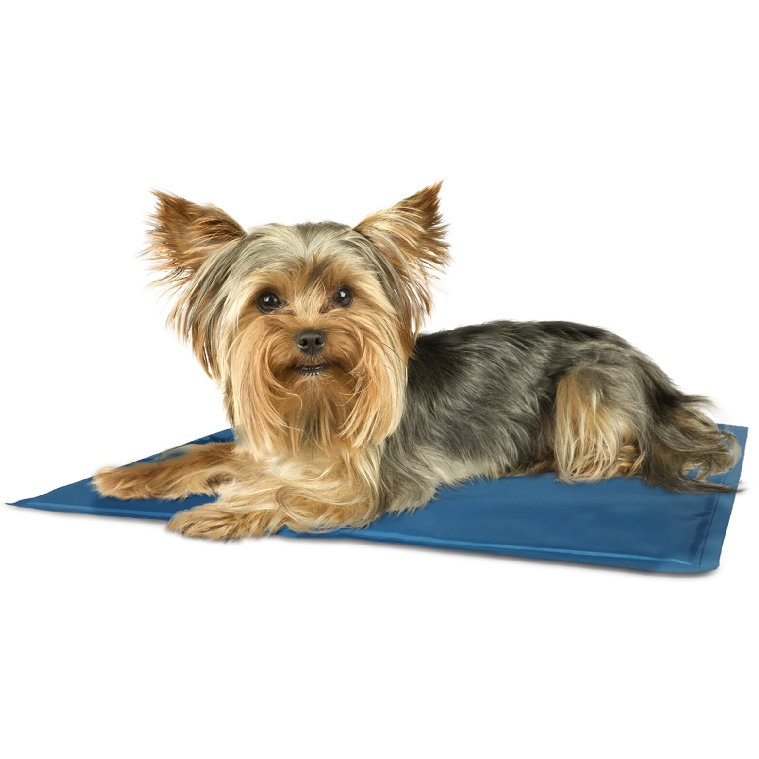 furhaven pupicicle dog cooling mat reviews wayfair. Black Bedroom Furniture Sets. Home Design Ideas
