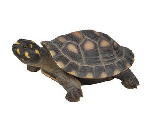 Spotted Turtle Figurine