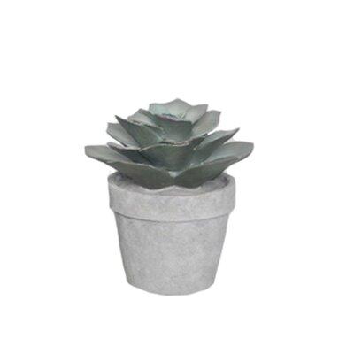Bungalow Rose Decorative Tree Resin Desktop Succulent Plant in Pot