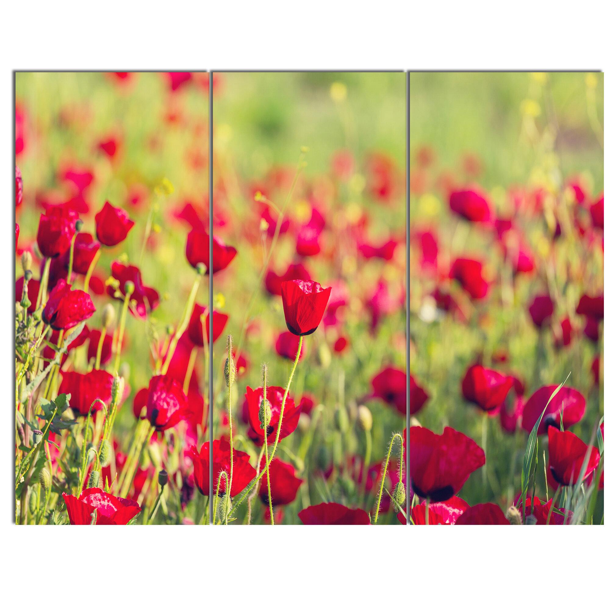 Designart Beautiful Poppy Flowers Background 3 Piece Photographic