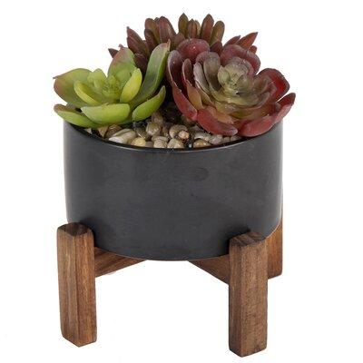 Bungalow Rose Succulent Plant in Pot Base Color: Black