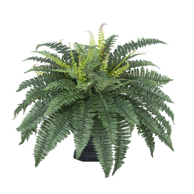 House Of Silk Flowers Artificial Fern Desk Top Plant In Decorative