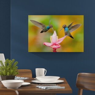 Two Flying Hummingbirds In The Tropics Wall Art On Canvas