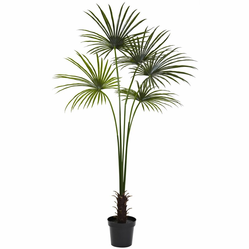 entracing palm tree type house plant. Fan Palm Tree in Pot Nearly Natural  Reviews Wayfair