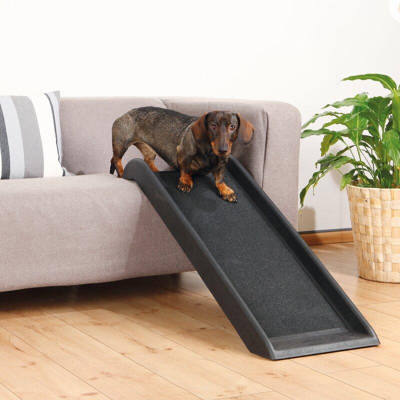 Dog Ramps & Stairs You\'ll Love   Wayfair
