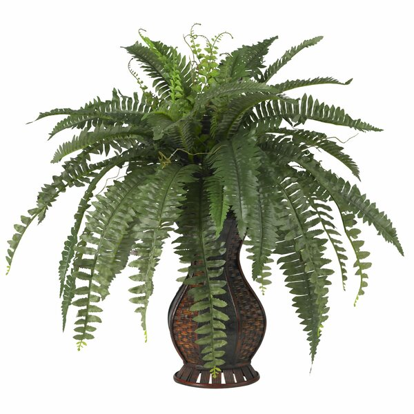 Indoor Plants Youu0027ll Love | Wayfair