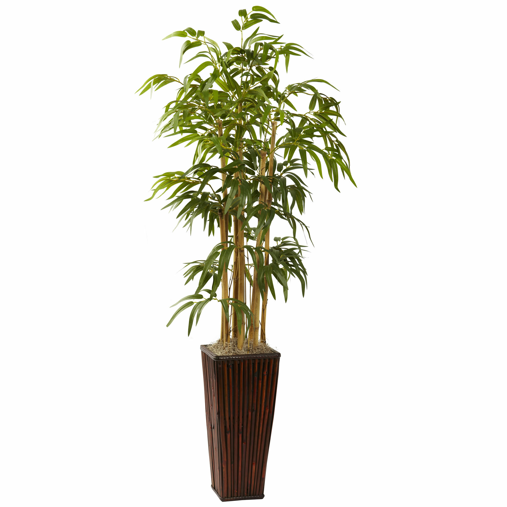 bamboo tree h in pin planter