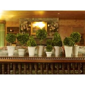 8 Piece Preserved Boxwood Topiary In Pot Set