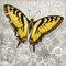 """Grafikdruck """"Yellow Butterfly III"""" von Alan Hopfensperger"""
