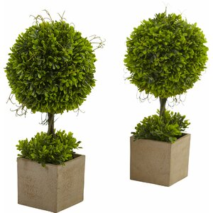 Boxwood Round Topiary in Planter (Set of 2)
