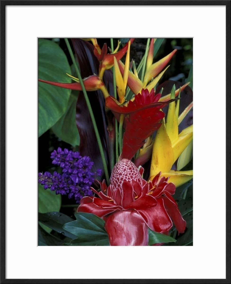 Bay Isle Home \'Colorful Tropical Flowers, Hawaii, USA\' Framed ...
