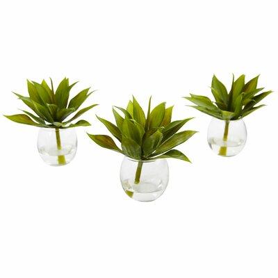 Desktop Succulent Plant In Ceramic Pot Reviews Joss Main