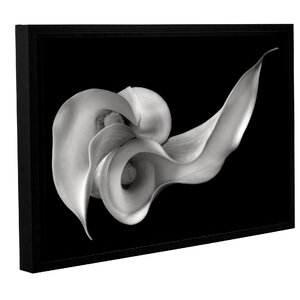 'Calla Lily' Framed Photographic Print