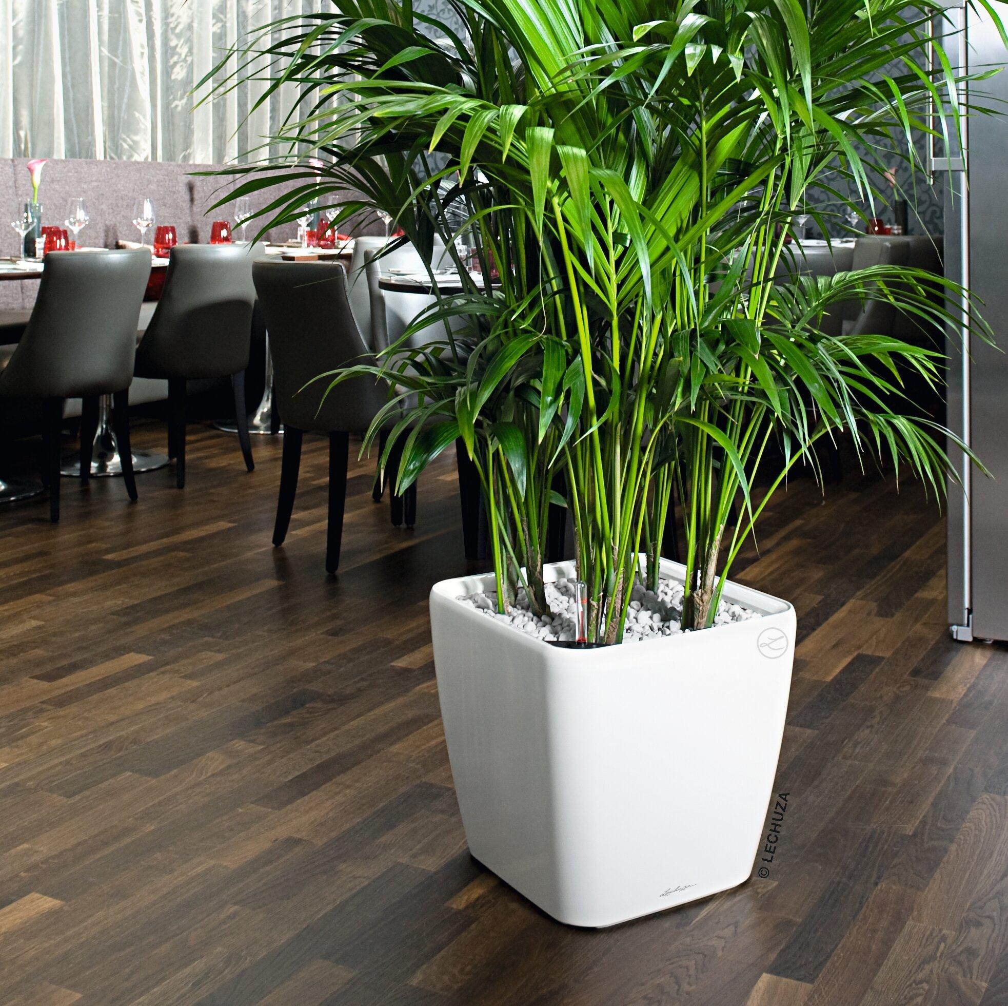Lechuza Quadro Premium Square Self Watering Plant Pot Reviews Wayfair Co Uk