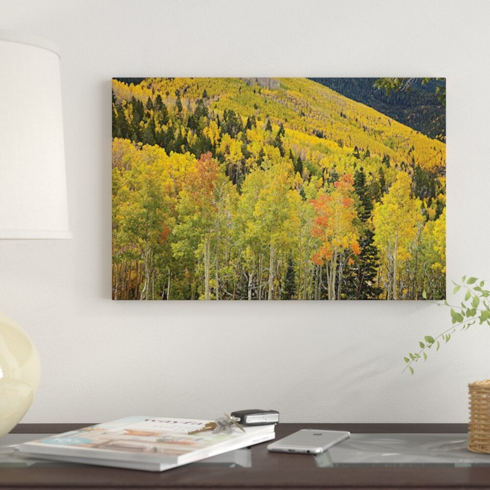 East Urban Home \'Quaking Aspen Trees in Autumn, Santa Fe National ...