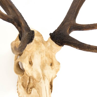 Funky Chrome Stags Head Wall Decoration Mold - Wall Art Design ...