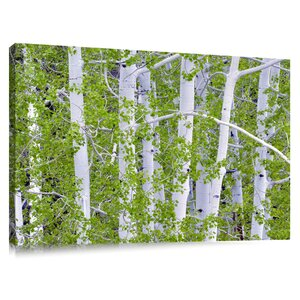 'Aspen Trees with New Spring Growth' by Dennis Frates Photographic Print on Canvas