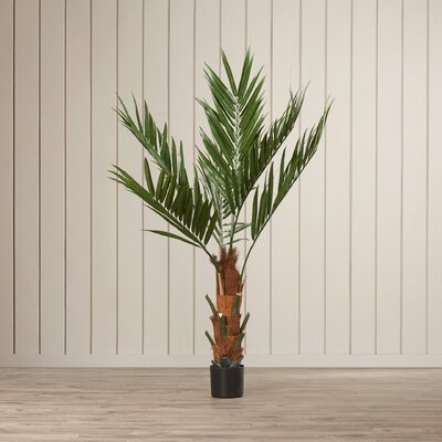 entracing palm tree type house plant. Artificial Kentia Palm Tree in Pot Nearly Natural Double Robellini Planter  Reviews Wayfair