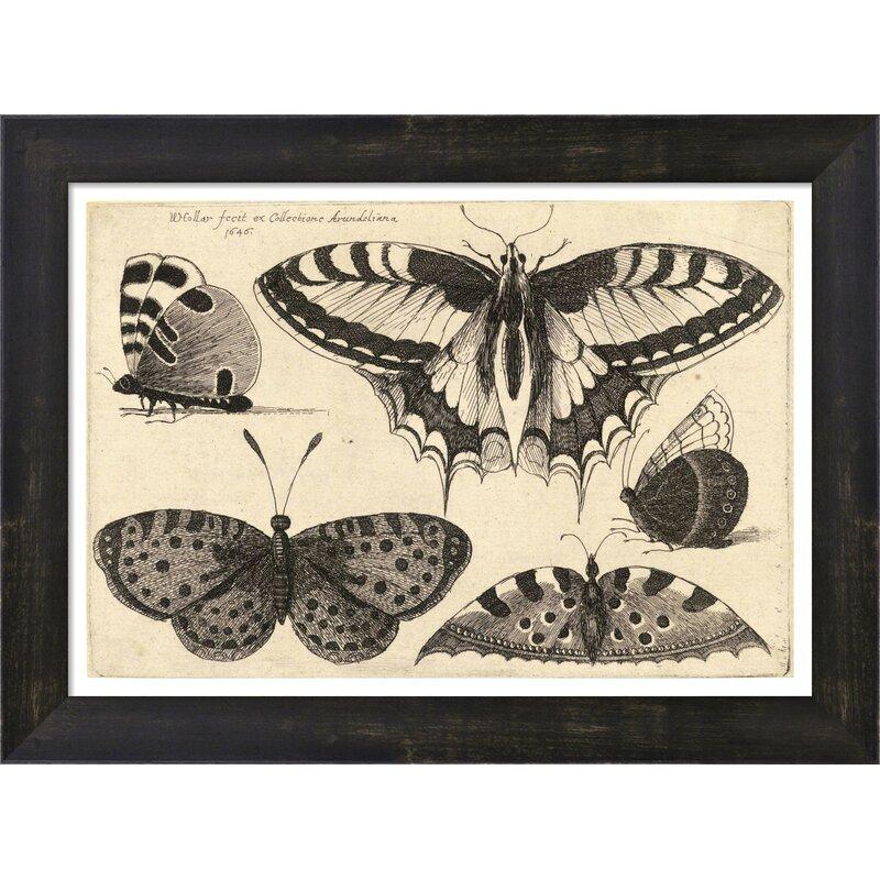 Vintage Butterfly III by Julia Kearney Framed Painting Print | Joss ...