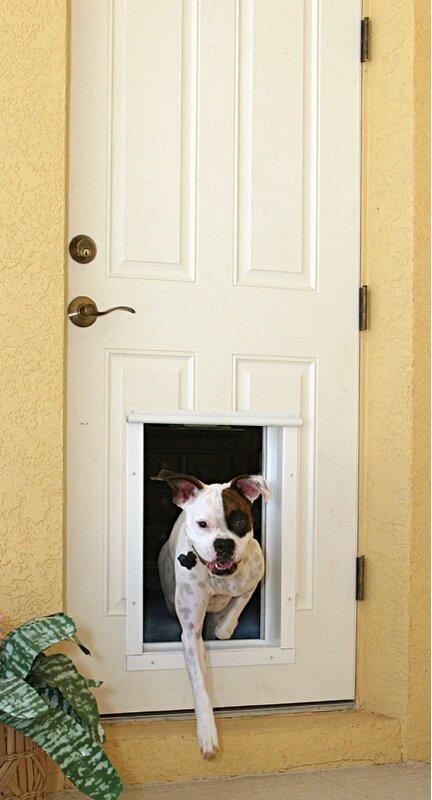 Plexidor Performance Electronic Pet Door Mount Wayfair