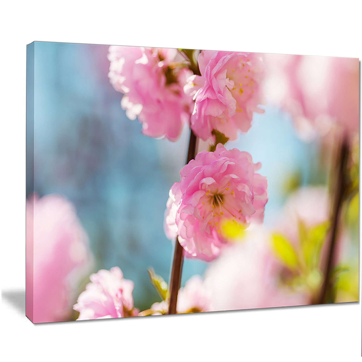 Designart Almond Tree Pink Flowers Photographic Print On Wrapped