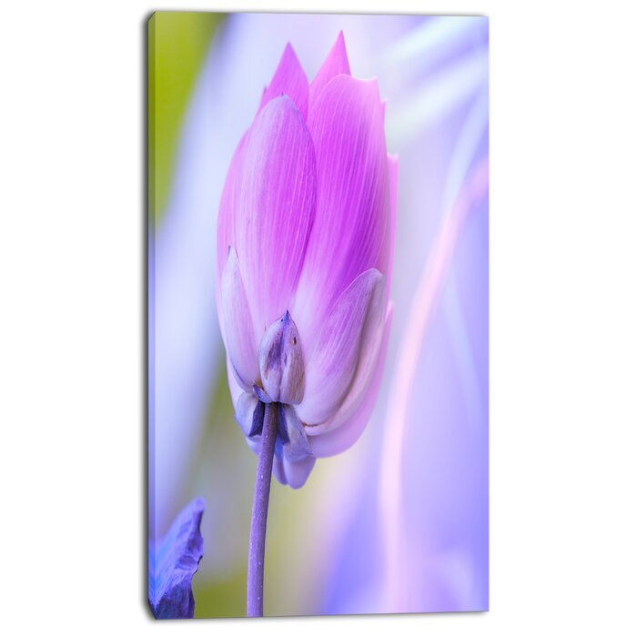 Designart Large Single Lotus Flower Graphic Art On Wrapped Canvas