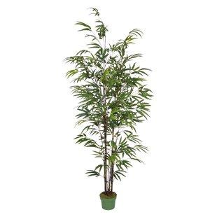 Tall Indoor Artificial Trees   Wayfair