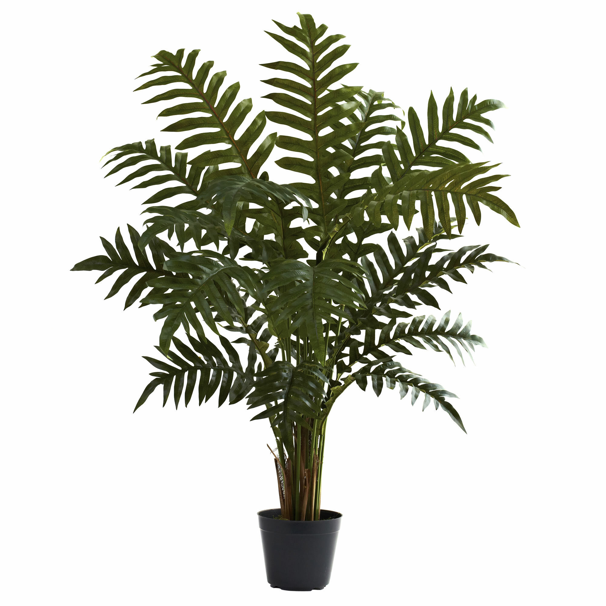 entracing palm tree type house plant.  Nearly Natural Evergreen Floor Plant in Pot Reviews Wayfair