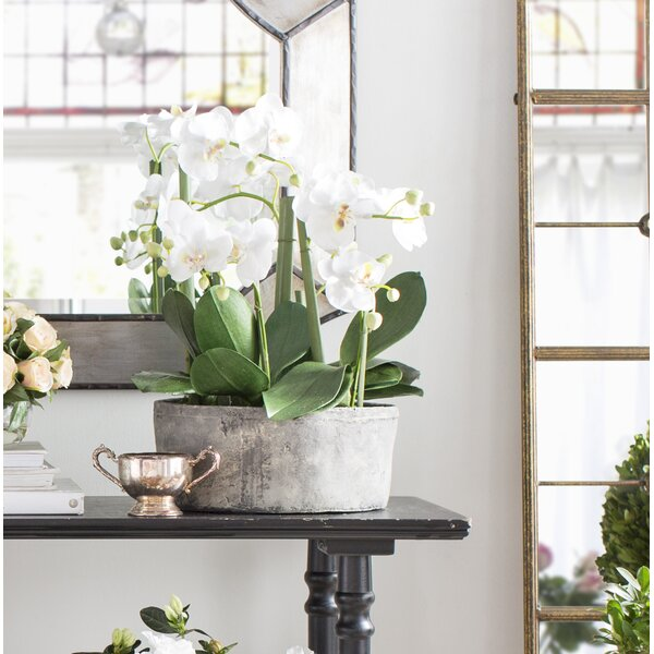 Greyleigh Phalaenopsis Orchid Floral Arrangements in Clay Pot ...