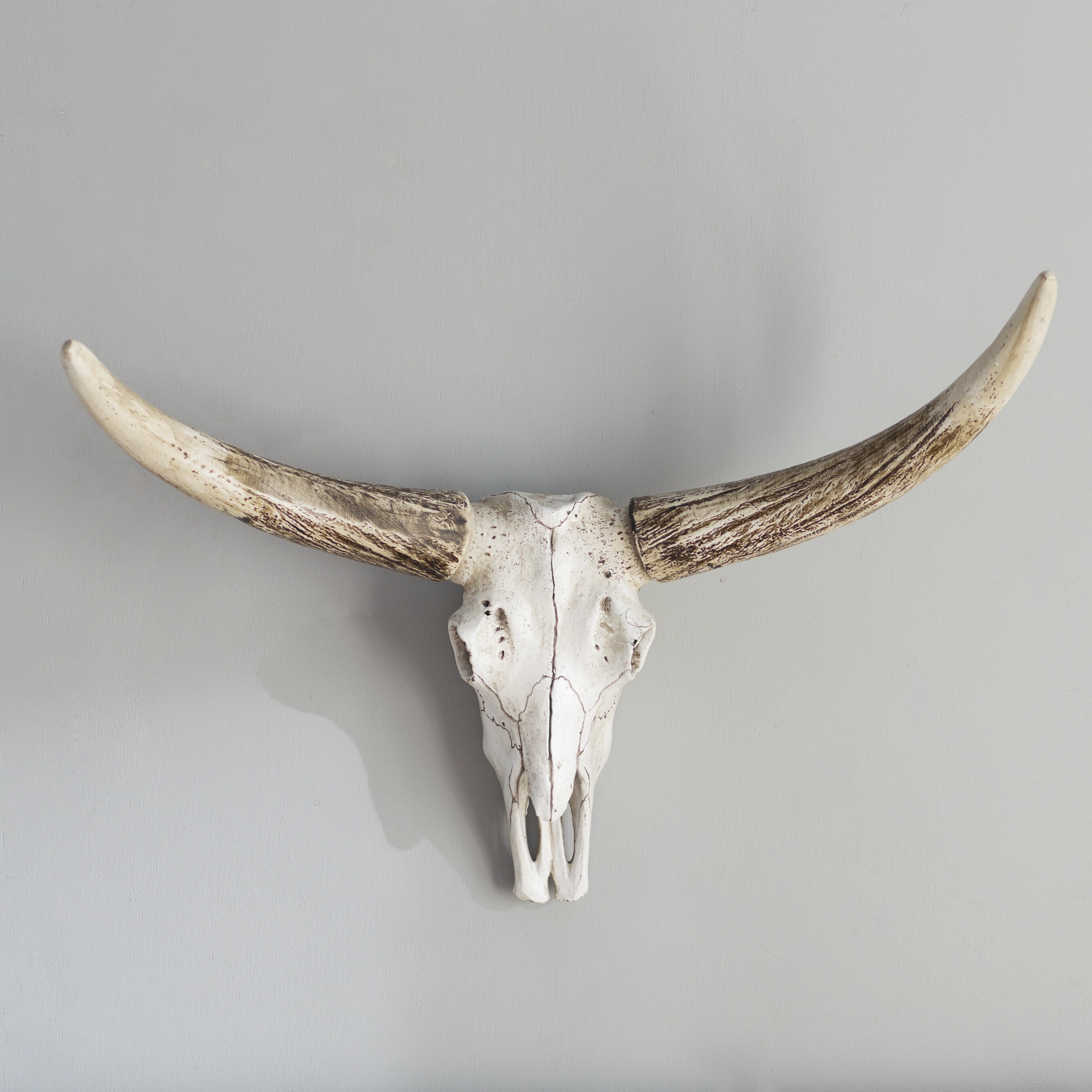 Loon Peak Resin Steer Skull Wall Décor & Reviews | Wayfair