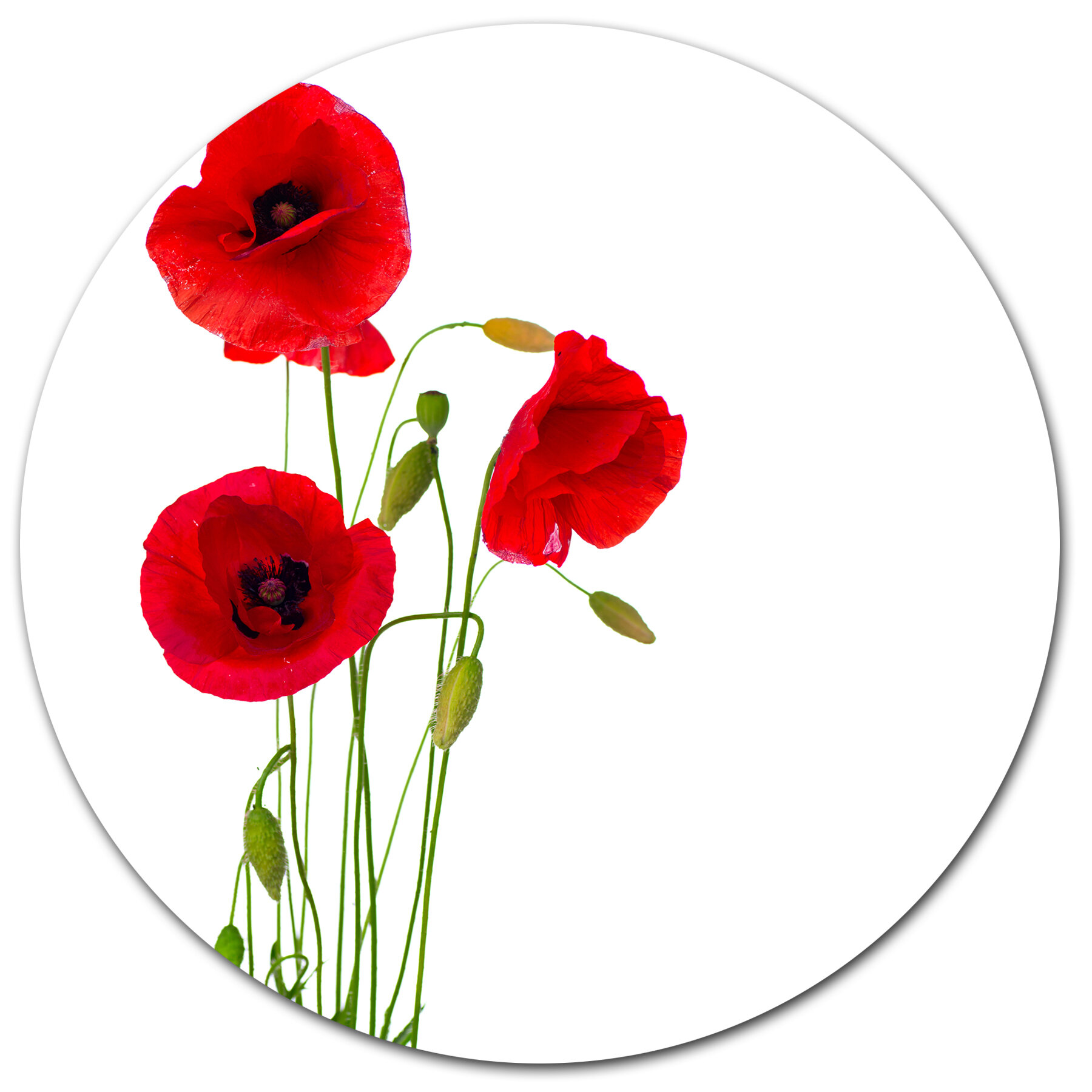 Designart Isolated Red Poppy Flowers Graphic Art Print On Metal