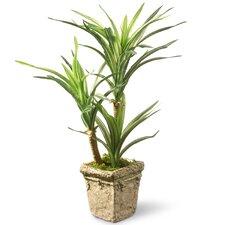 Plantes d 39 int rieur for Solde plante interieur