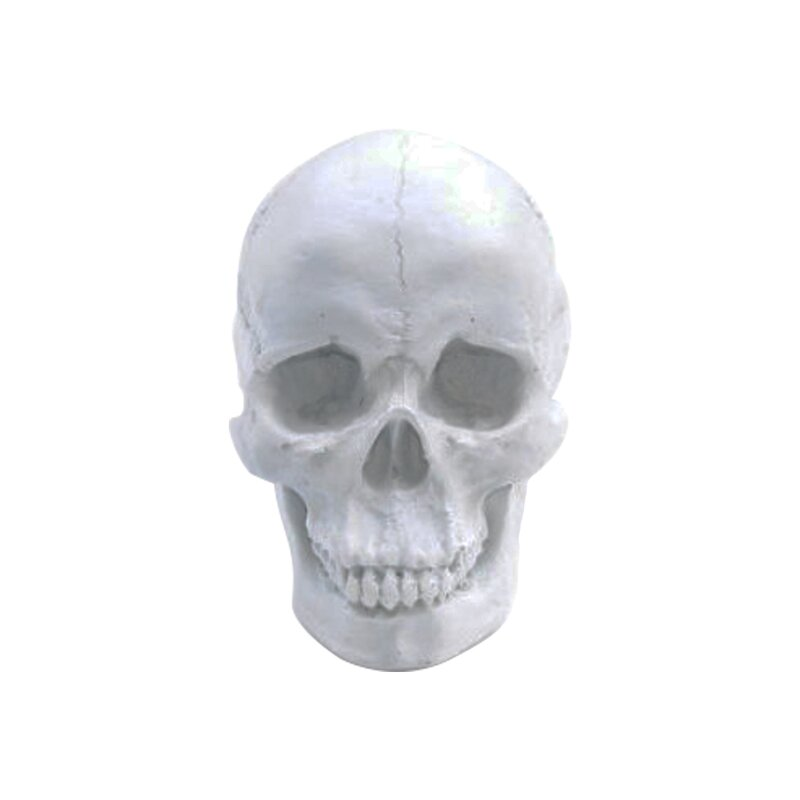 Ivy Bronx Ludgin Human Skeleton Head Halloween Sculpture Wayfair