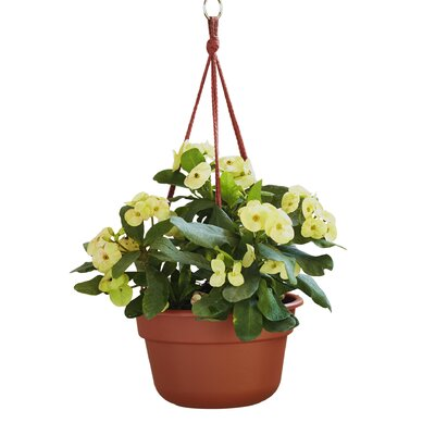 Lucca Self Watering Plastic Hanging Planter Reviews Joss Main