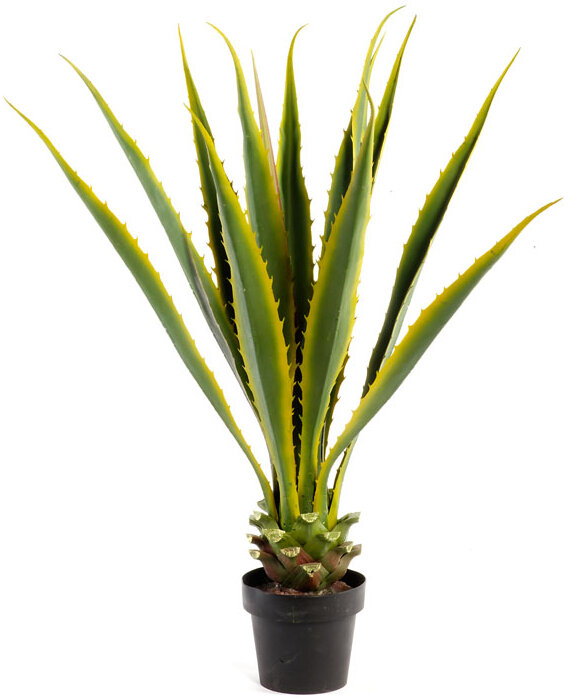 Agave Floor Plant in Pot