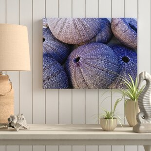Mina Sea Urchins Photographic Print On Wred Canvas